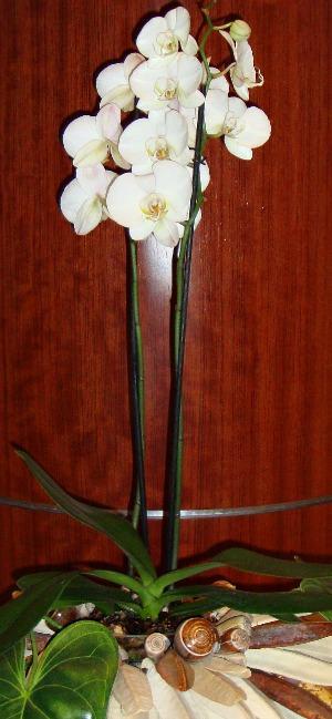Unique wedding centerpieces orchid plants