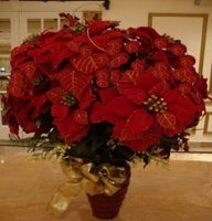 christmas centerpiece of poinsettias