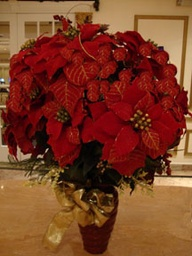 christmas centerpiece of poinsettias