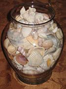 Clear Glass container filled with sea shells.
