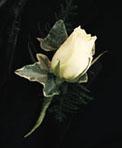 Wedding flower ideas for the groom