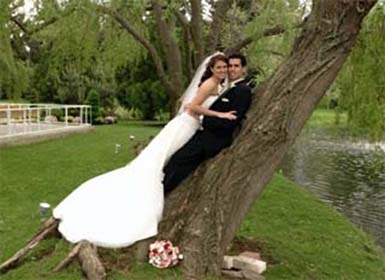 Wedding photo ideas in a tree