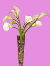 Calla Lily Centerpiece with rocks
