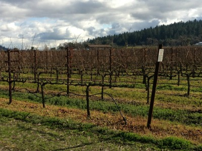 Choosing a Vineyard for your celebration
