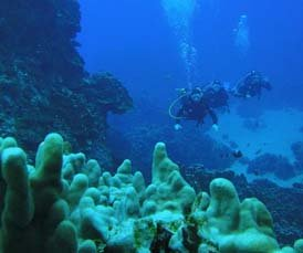 Scuba diving in Honeymoon Island is fantastic
