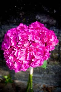 Bright pink bridal bouquet